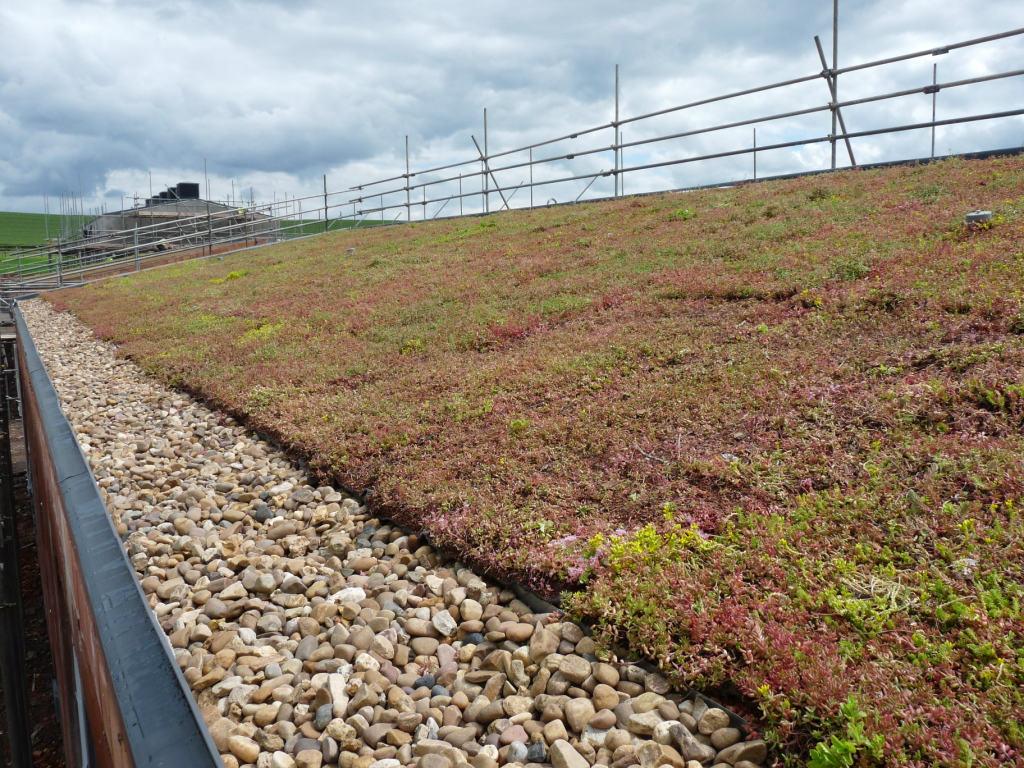 Greenroof Essex Flat Roofing